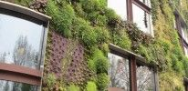 Quai Branly Museum Vertical Garden – Paris