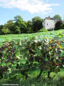 Montmartre village - La Treille vineyard