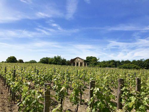 Saint-Emilion vineyard - Bordeaux wines