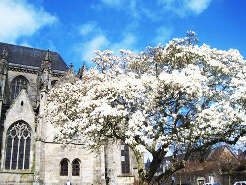 Saint Malo Church in Dinan - Magnolia tree in bloom