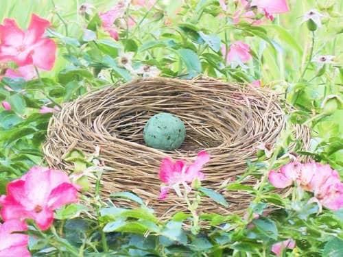 Easter Eggs - bird nest