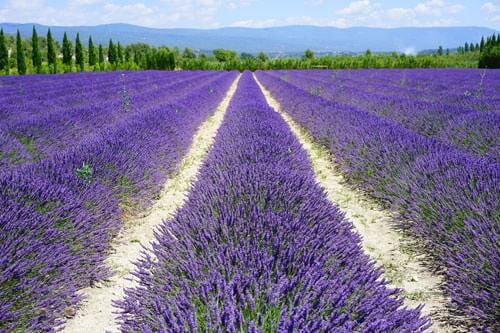 Provence Alpes Côte d'Azur Region origins