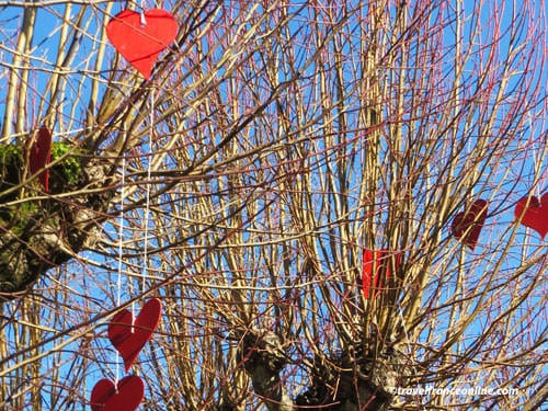 Hearts in trees to celebrate Valentines Day