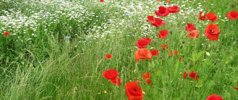 Remembrance Day – Armistice Day – 1914-1918
