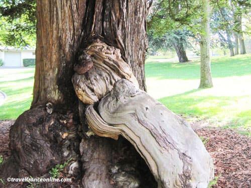 Parc Montsouris old tree