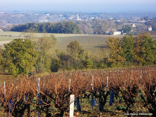 Gaillac wine - vineyard in winter