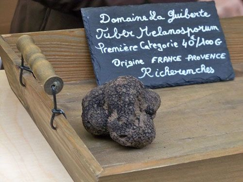 Black truffle from Perigord