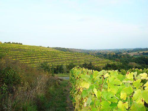 Anjou-Saumur Vineyard - Coteaux du Layon vineyards