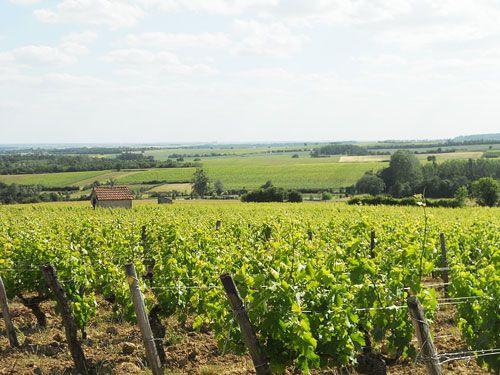 Centre-Loire Vineyard - Menetou-Salon vineyard