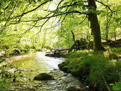 Plateau de Millevaches - River Vienne in Tarnac