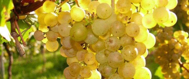 Pays Nantais Vineyard – Appellations – Loire