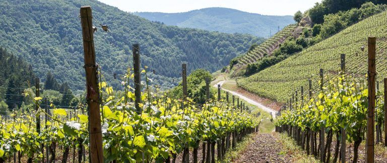 Auvergne Vineyard – Appellations – Loire