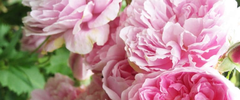 Grasse – Perfume World Capital – Provence