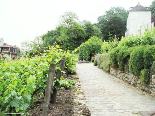 Grape Harvest Festival in Montmartre - Clos Montmartre in spring