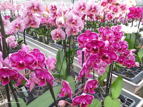 Orchids nursery near Paris