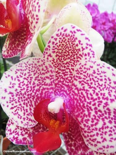 Orchids nursery near Paris