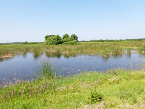 Baie d'Audierne reeds