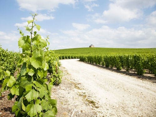 Moet-Chandon vineyard - Champagne-Ardenne region