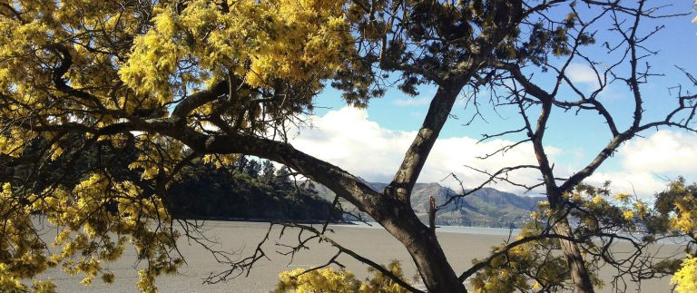 Bandol seaside resort and vineyard – Cote d'Azur