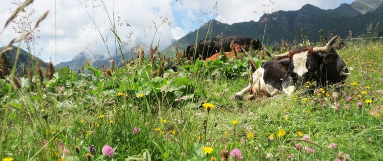 French Alps Flora for Travel France Online