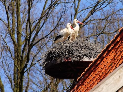 The stork that delivers babies - Storks nest on a platform