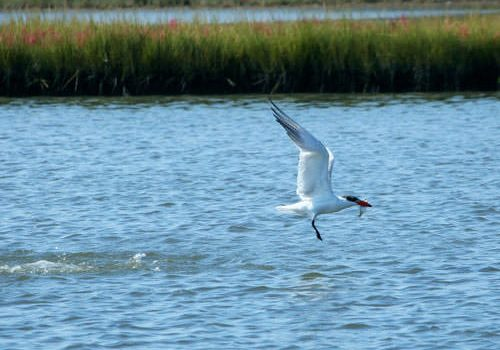 Baie d'Audierne - tern fishing