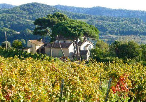 Bandol-Vineyards-