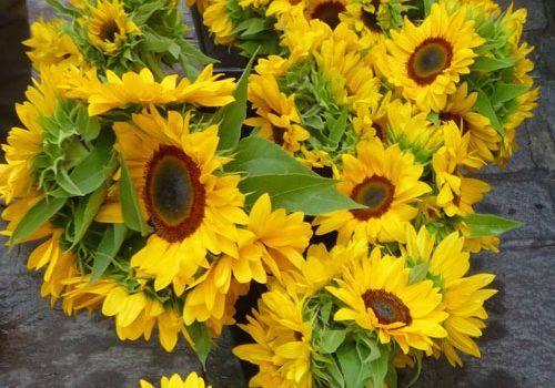 Uzes-Sunflowers-at-Wednesday-Market